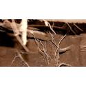 Les racines - Face cachée des arbres