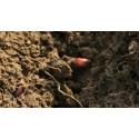 Les matières organiques des sols
