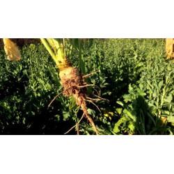 Les couverts végétaux