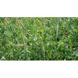 Engrais verts et fertilité des sols