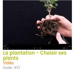 La plantation – Choisir ses...